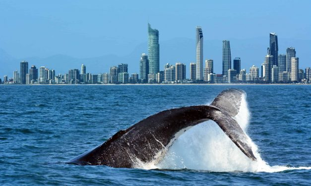 10 Great Reasons to Move to Australia's Gold Coast