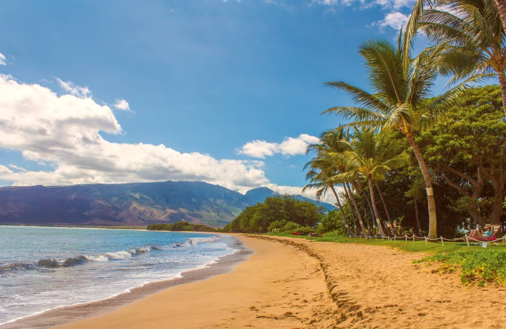 Hawaii sandy beach with palms