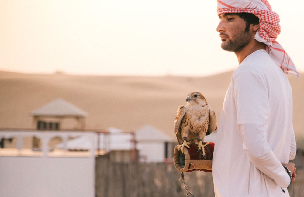 falcon in desert Emirates