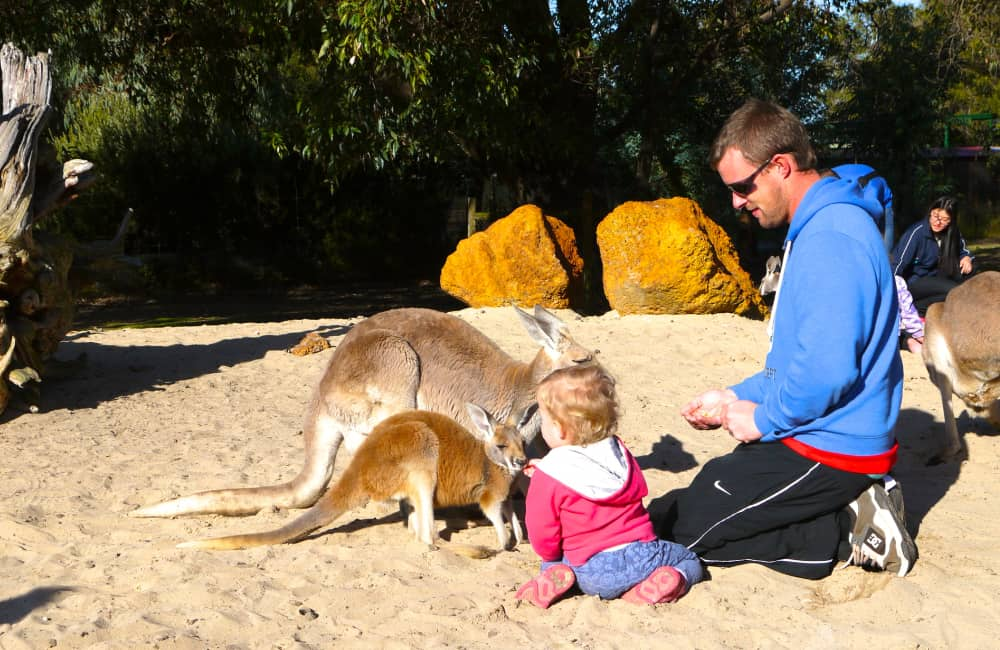 family with kangaroo