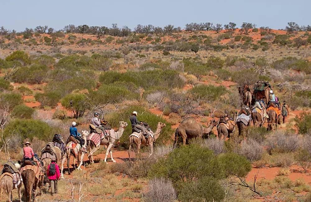 Camel Trekking Flinders
