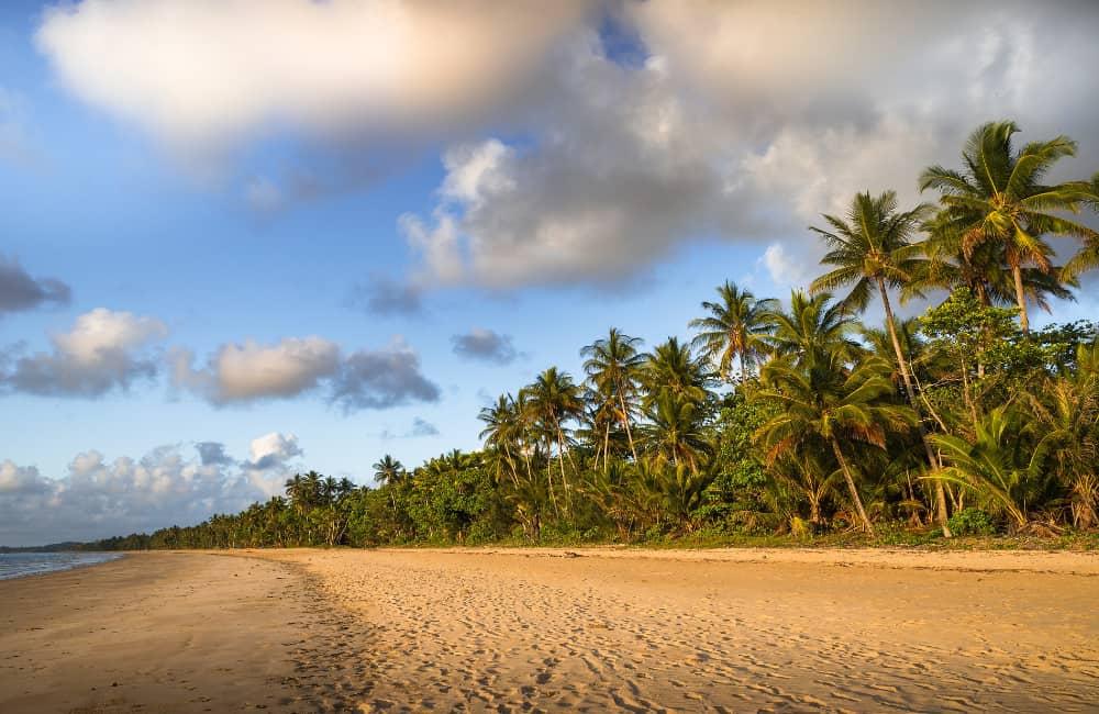 Mission Beach Palms